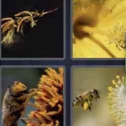 4 Pics 1 Word 6 Letters Pollen