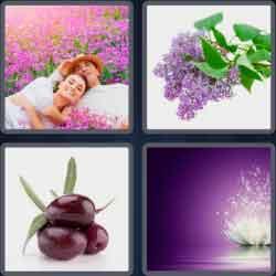 4 Pics 1 Word 6 Letters Purple