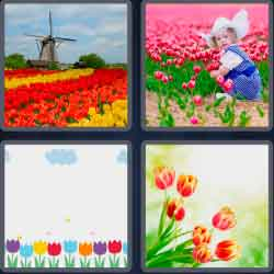 4-pics-1-word-6-letters-tulips