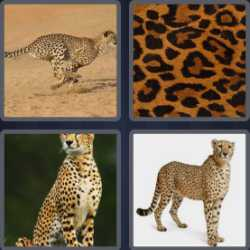 4-pics-1-word-7-letters-cheetah