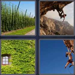 4-pics-1-word-7-letters-climber