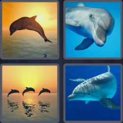 4-pics-1-word-7-letters-dolphin