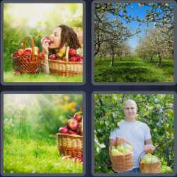 4-pics-1-word-7-letters-orchard