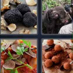 4 Pics 1 Word 7 Letters Truffle