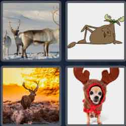 4-pics-1-word-7-letters-antlers