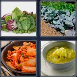 4-pics-1-word-7-letters-cabbage