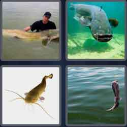 4-pics-1-word-7-letters-catfish