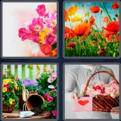 4-pics-1-word-7-letters-flowers