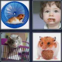 4-pics-1-word-7-letters-hamster