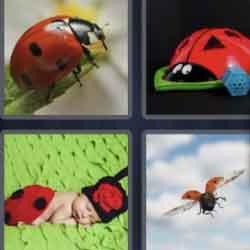 4 Pics 1 Word 7 Letters Ladybug
