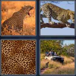4-pics-1-word-7-letters-leopard