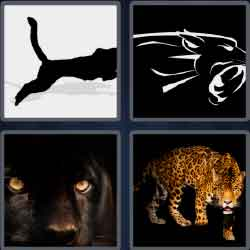 4 Pics 1 Word 7 Letters Level 3716 Panther