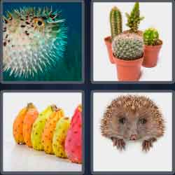 4 Pics 1 Word 7 Letters Level 3722 Prickly