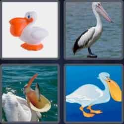 4-pics-1-word-7-letters-pelican