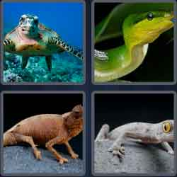 4-pics-1-word-7-letters-reptile
