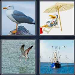 4-pics-1-word-7-letters-seagull