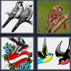 4-pics-1-word-7-letters-sparrow