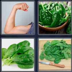 4-pics-1-word-7-letters-spinach