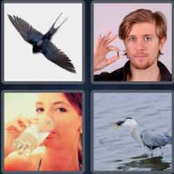 4-pics-1-word-7-letters-swallow