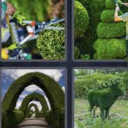 4 Pics 1 Word 7 Letters Topiary
