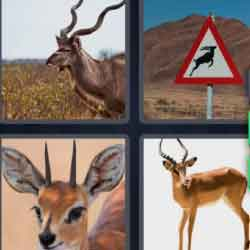 4 pics 1 word 8 letters deer with horns, road sign