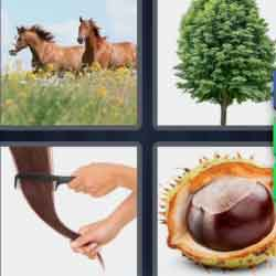 4 pics 1 word 8 letters Chestnut