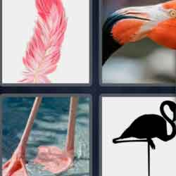 4 pics 1 word 8 letters Flamingo