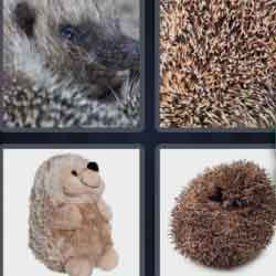 4 pics 1 word 8 letters Hedgehog