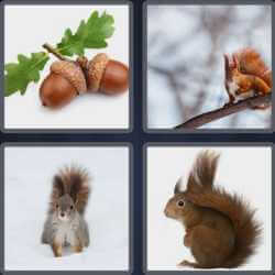 4-pics-1-word-8-letters-squirrel