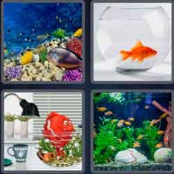 4 pics 1 word 8 letters aquarium
