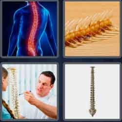 4 pics 1 word 8 letters backbone