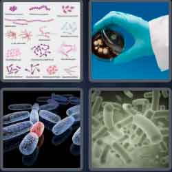 4 pics 1 word 8 letters bacteria