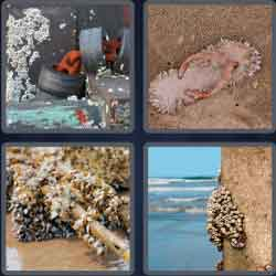 4 pics 1 word 8 letters barnacle