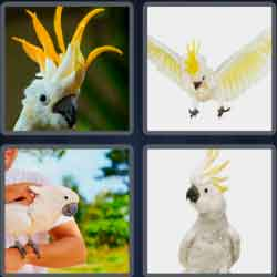 4 pics 1 word 8 letters cockatoo