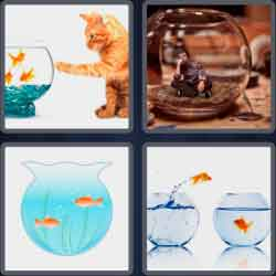 4 pics 1 word 8 letters fishbowl