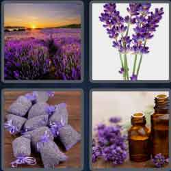 4 pics 1 word 8 letters lavender