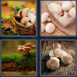 4 pics 1 word 8 letters mushroom