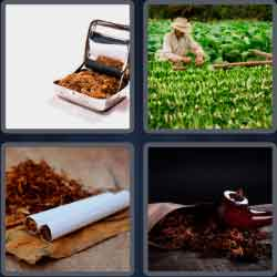 4 pics 1 word 8 letters tobacco