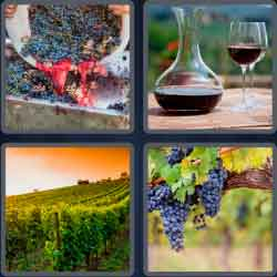 4 pics 1 word 8 letters vineyard