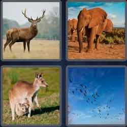 4 pics 1 word 8 letters wildlife