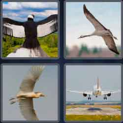 4 pics 1 word 8 letters wingspan