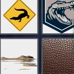 4 Pics 1 Word 9 Letters Alligator