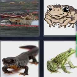 4 Pics 1 Word 9 Letters Amphibian