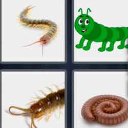 4 Pics 1 Word 9 Letters Centipede