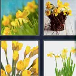 4 Pics 1 Word 9 Letters Daffodils