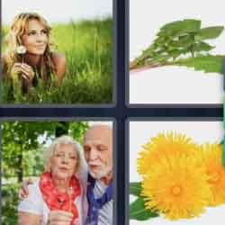 4 Pics 1 Word 9 Letters Dandelion
