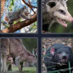 4 pics 1 word 9 letters answers easy search updated 2018 marsupial expocarfo Gallery