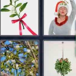 4 Pics 1 Word 9 Letters Mistletoe