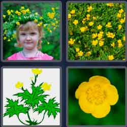 4-pics-1-word-9-letters-buttercup