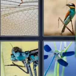 4 Pics 1 Word 9 Letters Dragonfly